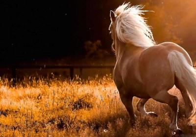 horses_12-wallpaper-1280×720
